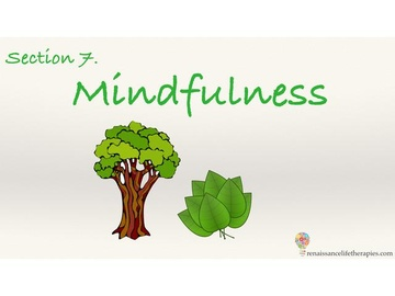 Mindfulness Training Course Section Seven
