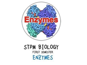 STPM Bio Question 2 - Enzymes